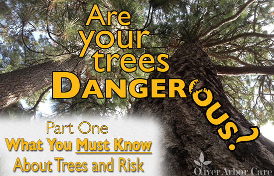 dangertree---trees-and-risk