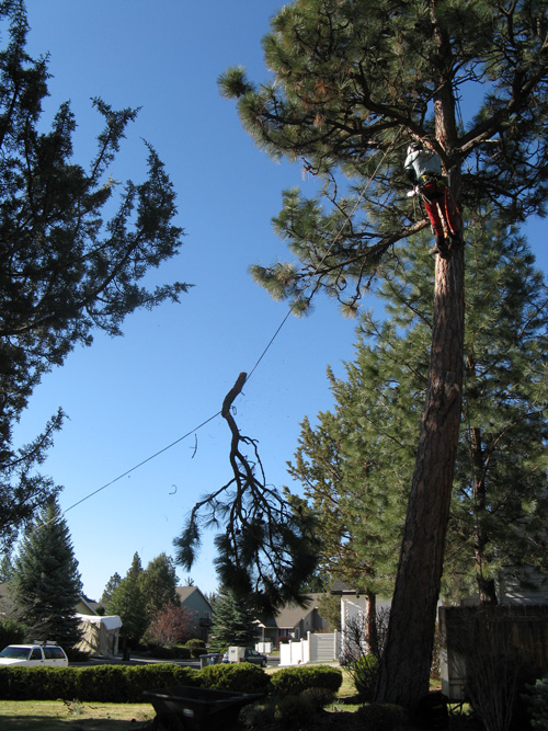 Tree Service In Bend Oregon Removing Tree3